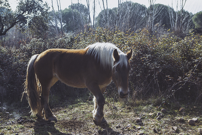 nachouve-horse-urban_outfitters-river-0001.jpg