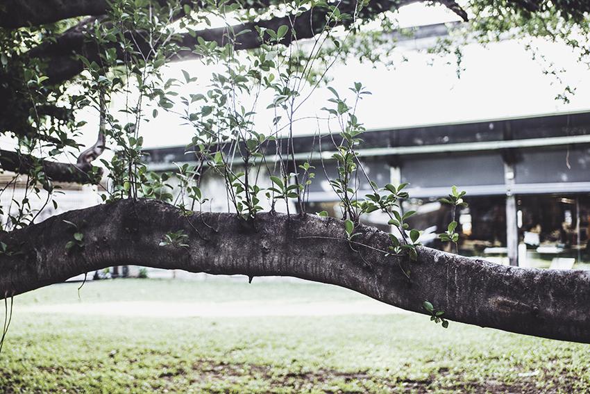 nachouve-bangkok-asos-08.jpg